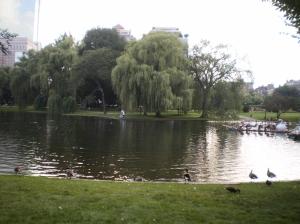 Public Garden Swan Pond